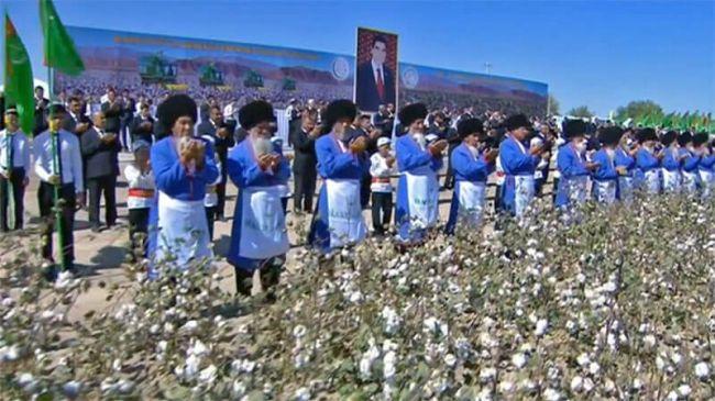 В Туркмении планируют собрать 1 млн 50 тыс. тонн хлопка